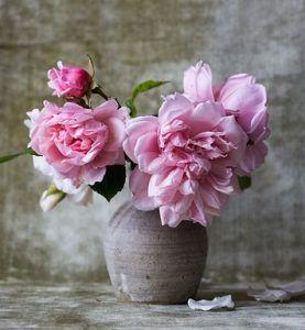 roses-828564_640