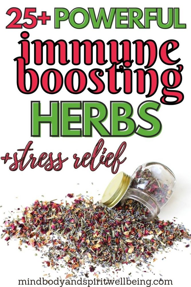 immune system adaptogenic herbs to fight stress and chronic fatigue
